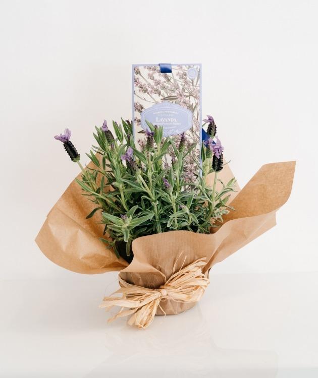 Fleurs à Lisbonne - Pack Alfazema e Saqueta Perfumada Castelbel 1