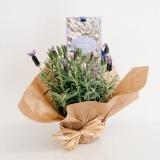 Fleurs à Lisbonne - Pack Alfazema e Saqueta Perfumada Castelbel 1 Thumb