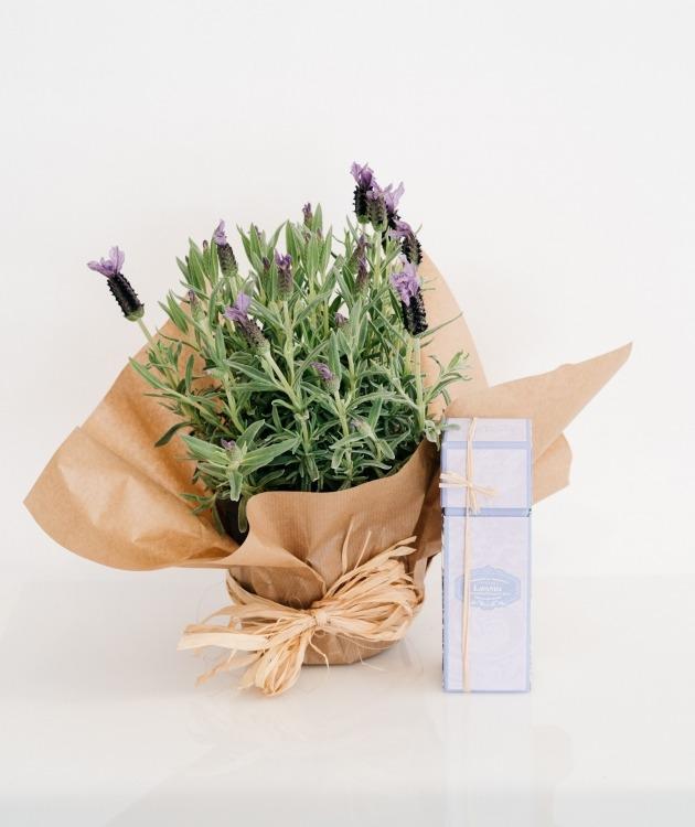 Fleurs à Lisbonne - Pack Alfazema e Ambientador para Casa Castelbel 1