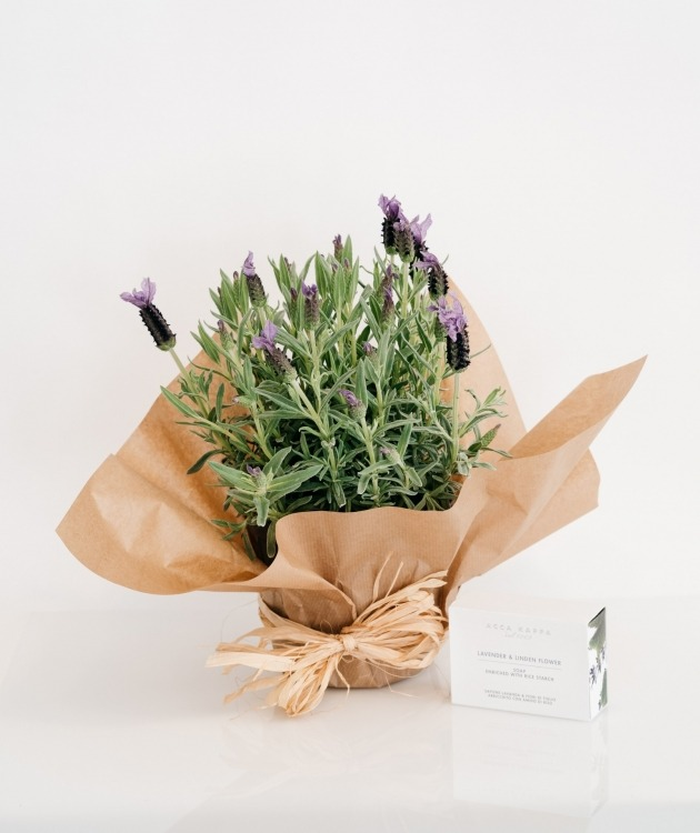 Fleurs à Lisbonne - Pack Alfazema e Sabonete Lavanda e Tília Acca Kappa 1