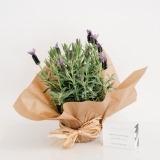 Fleurs à Lisbonne - Pack Alfazema e Sabonete Lavanda e Tília Acca Kappa 1 Thumb