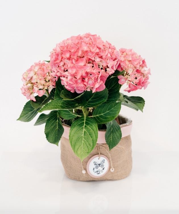 Fleurs à Lisbonne - Hortensia Cor de Rosa com Cesto Decorativo 1