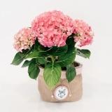 Fleurs à Lisbonne - Hortensia Cor de Rosa com Cesto Decorativo 1 Thumb