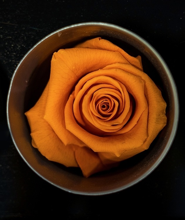 Fleurs à Lisbonne - Rosas Preservadas 5