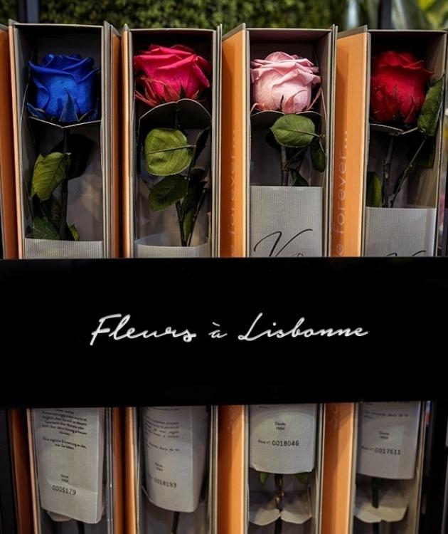 Fleurs à Lisbonne - Rosas Preservadas 1
