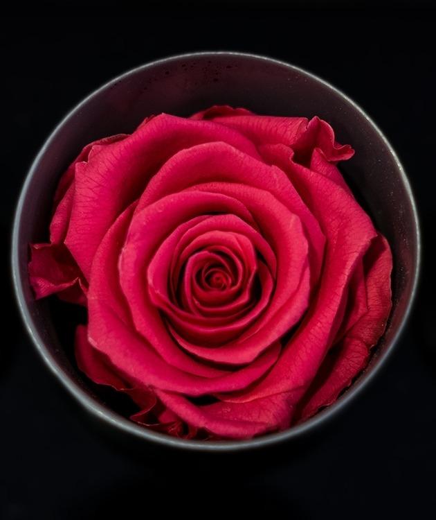 Fleurs à Lisbonne - Rosas Preservadas 4