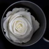 Fleurs à Lisbonne - Rosas Preservadas 6 Thumb