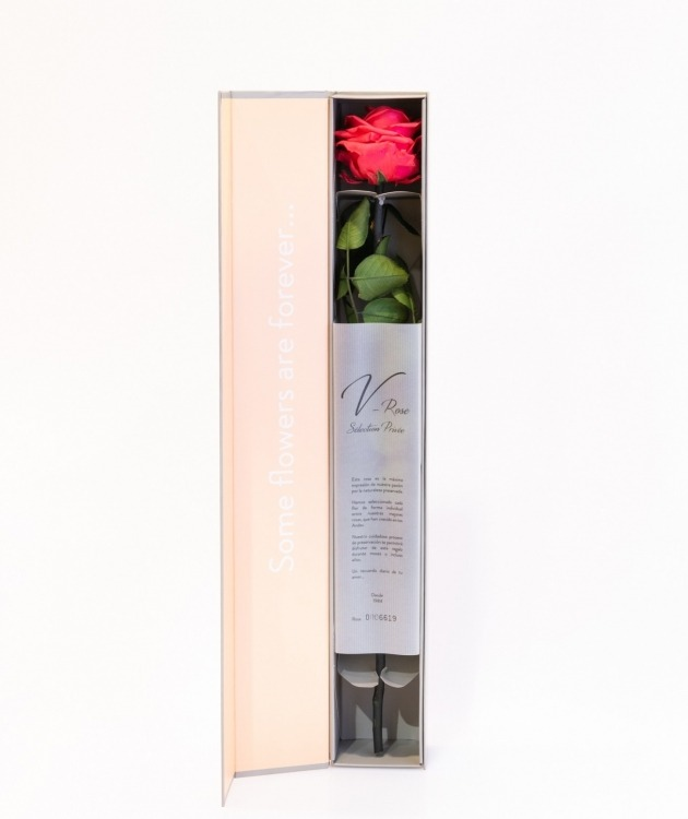 Fleurs à Lisbonne - Rosa Preservada vermelha 1